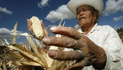 mexico_campesino