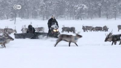 reindeerfinland