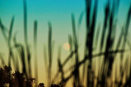 moon-full-7-19-2016-Kristal-Alaimo-Moritz-e1468947224254