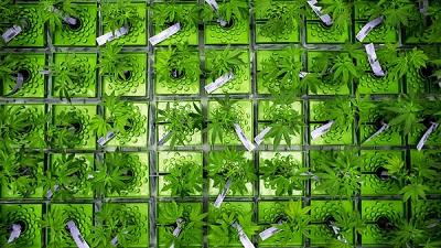 cannabis-banking-