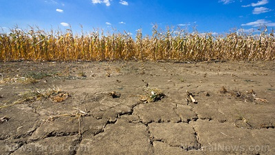 Drought-Corn-Field-Dry-Soil-Farm-Drought