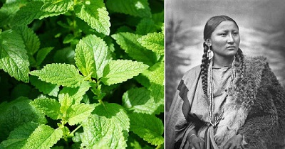 native-americans-plants