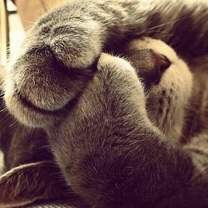 kitttycat