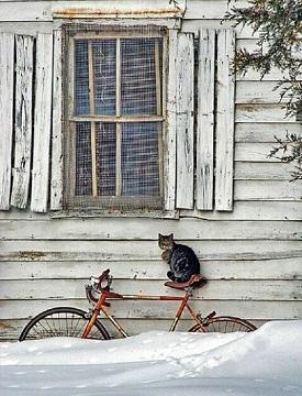 kittycat4