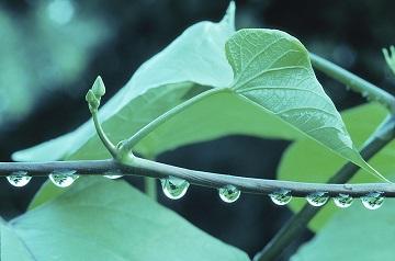 water_droplet
